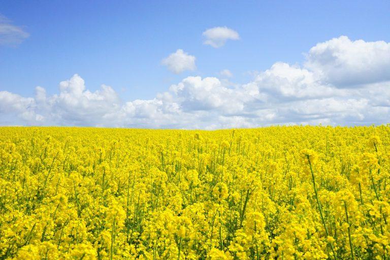 Niewłaściwie stosowane pestycydy mogą mieć negatywne skutki zdrowotne