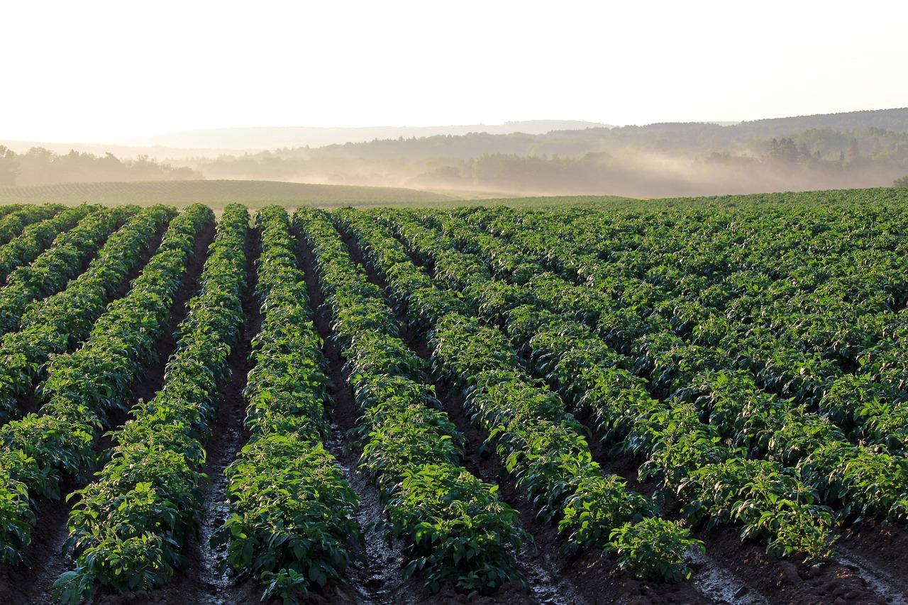 Jaka ochrona zbóż jarych powinna być zapewniona?
